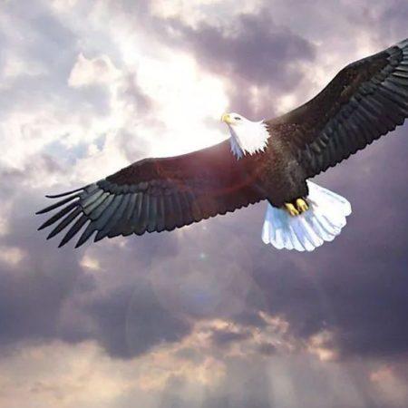「如鷹展翅」尋道者崇拜